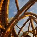 Idee per animare un'opera in bambù durante le giornate di Green Utopia