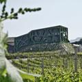 L'architettura del vino in Alto Adige