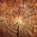 Tv4newood. Un nome e un logo per il legno termovuoto trattato