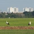 I paesaggi periurbani: la dimensione ecologica nella governance territoriale