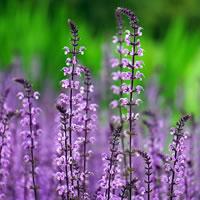 Un giardino sensoriale per l'A.S.P. di Tolentino