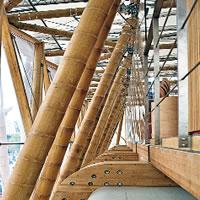 Conoscere il bambù: usi e aspetti della pianta dalle mille risorse