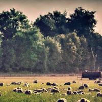 Il Borgo di Collazzone protagonista di un workshop per la riqualificazione del territorio rurale
