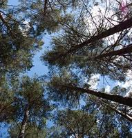 Un'area di interscambio sociale e culturale per valorizzare la Pineta di Monteluco di Roio