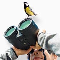 Pape Bird Observation Tower: cercasi idee per una nuova torre di osservazione nel Pape Natur Park in Lettonia