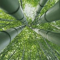 Conoscere il bambù e il suo utilizzo in ambito architettonico