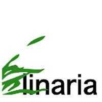 In arrivo a Roma tre nuovi workshop di Linaria: tre interventi di riqualificazione urbana