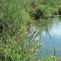 Fitodepurazione e riuso dell'acqua: case sparse e aziende agrituristiche