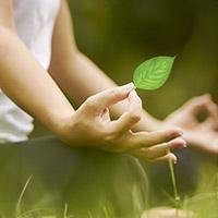 Silent Meditation Forest Cabins: architetture meditative nella foresta lettone