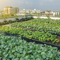 Cultivons notre jardin. A Torino due incontri italo-francesi tra natura e città