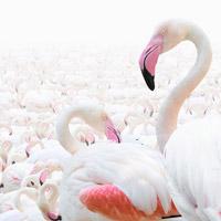 Abu Dhabi Flamingo Observation Tower: un belvedere sul mondo dei fenicotteri