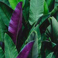 My Plant & Garden 2019: gli eventi per i professionisti organizzati da Paysage