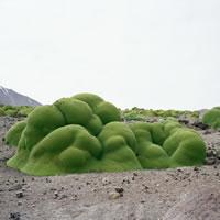 Broken Nature. Il design ricostituente alla XXII Esposizione Internazionale della Triennale di Milano