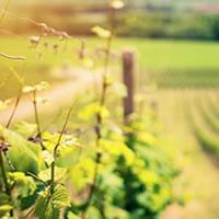 In Wine the Truth. Cinema, architettura e vino in sette cantine toscane