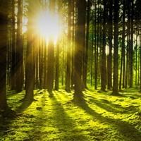 30 milioni per la riforestazione urbana (anche verticale): ok in CdM al decreto clima