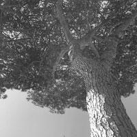 Real Wood. Oggetti di design per far rinascere i pini marittimi del Real Sito di Carditello