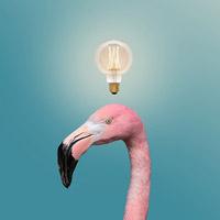 Abu Dhabi Flamingo Visitor Center. Un centro visitatori nell'oasi di fenicotteri degli Emirati Arabi