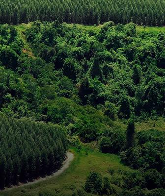 TreeHousing - alloggi lowcost in legno